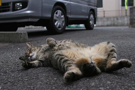 ヒカキン家の猫になりたい?人間である以上、努力で上り詰めるしかない!