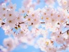 なってぃんがむの春